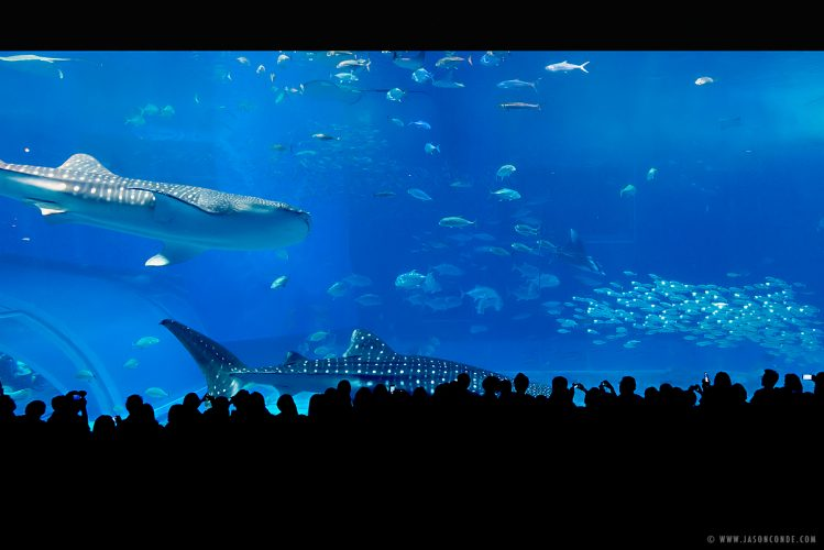 Okinawa Churaumi Aquarium_1
