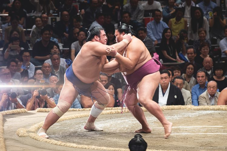 sumo_4